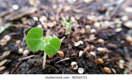 Small trees with Start Growth