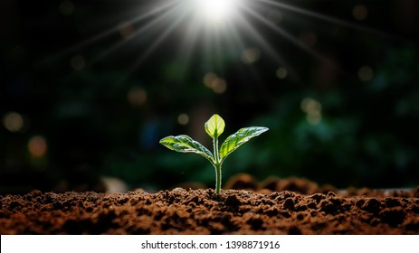 Small trees that grow in nature and morning light Concepts Earth Day - Shutterstock ID 1398871916
