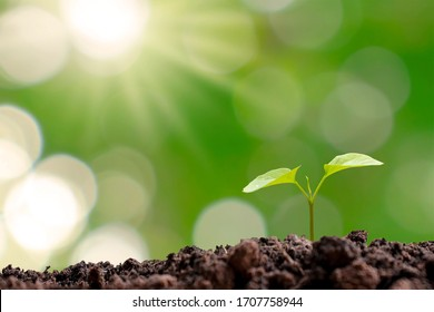 Small trees that grow on the ground, concepts of plant growth and investment for agriculture.