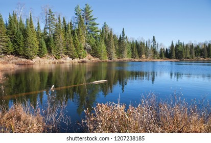 Small trout lake in northern Minnesota with beautiful blue water and pine trees on the shore
