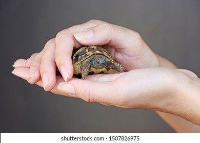 Small turtles, pet in the hands of a young girl