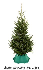 Small undecorated Christmas tree in plastic tree stand over white background.