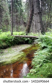 Small Varesjoki stream in the forest at Salo, Finland.