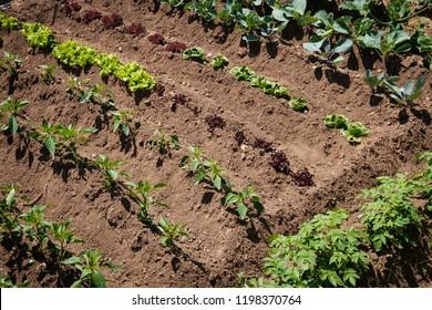 small vegetable plants growing in garden bed