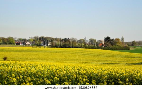 a small village and beautiful rape fields