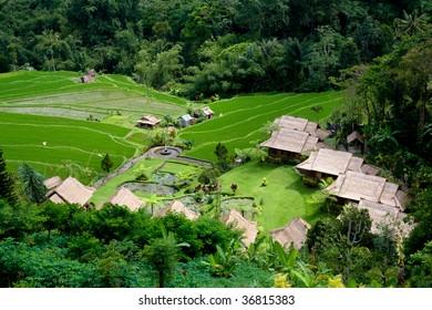 Small village in the rice field, Bali, Indonesia