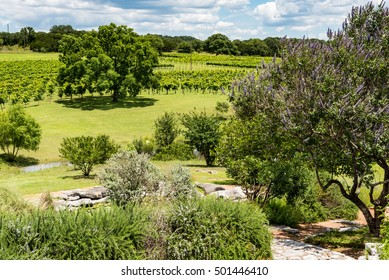 Small vineyard in the Texas hill country with cascading slopes and trees