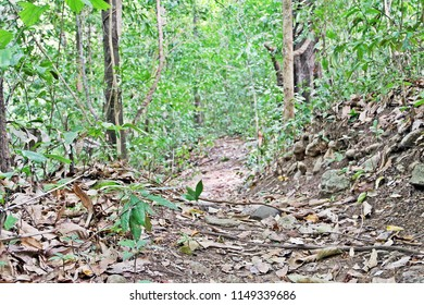 Small walking road in greenery rain forest for trail trekking at Erawan Waterfall National Park, Thailand