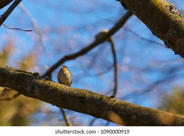 Small warbler on the branch