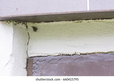 The small wasp nests on the plaster.