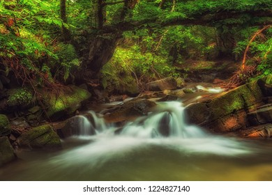 Small waterfall in deep green forest