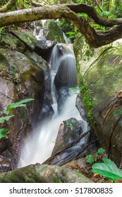 small waterfall in forest.