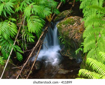 Small waterfall surrounded by ferns.