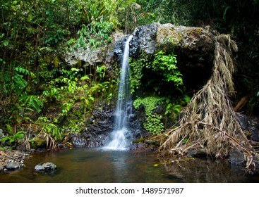 Small waterfall in the Wooroonooran National Park in Queensland Australia. Waterfall surrounded by lush green tropical rainforest.