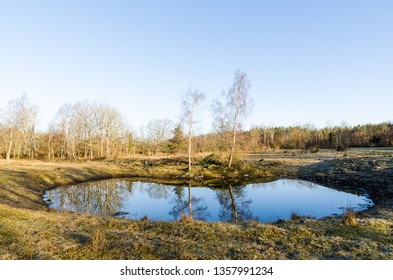 Small watering place with reflections in a swedish landscape by spring season