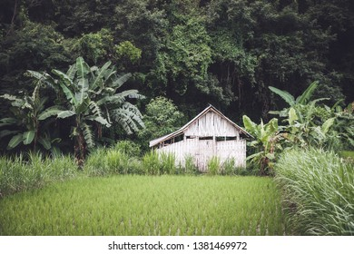Small white bamboo hut between a rice field and the jungle in Bali, Indonesia