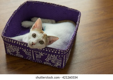 small white cat inside of a small basket