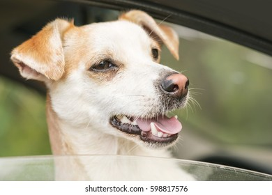 Small white dog in the car