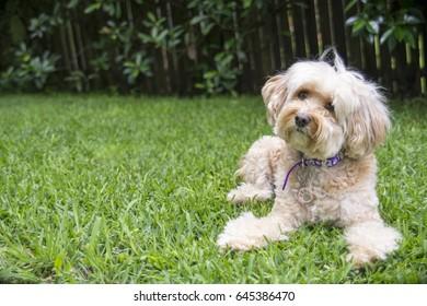 Small white dog in garden