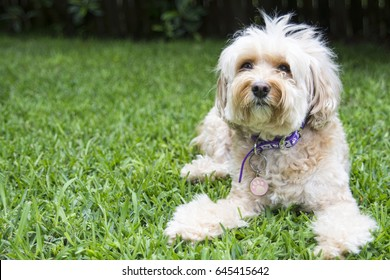 Small white dog on grass