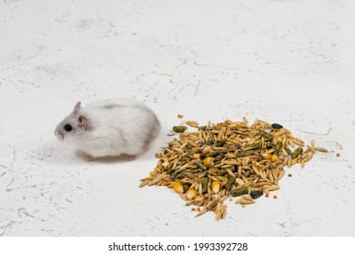 Small white Dzungarian hamster sits near a pile of food on a white background.