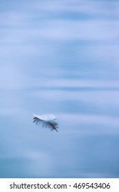 Small white feather floating in water
