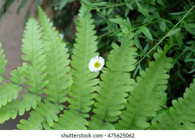 small white flower and leave
