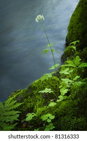 A small white flower on the edge of a river