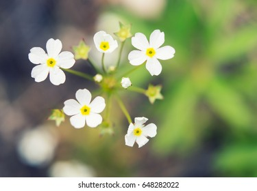 Small white flowers close-up with soft focus