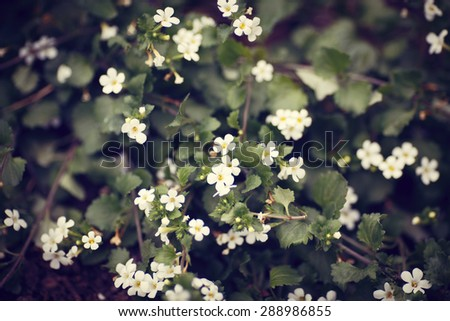 Small White Flowers Flowerbed Green Old Stock Photo Edit Now