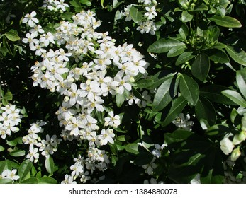 Small white flowers and foliage