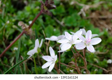 small white flowers in the grass