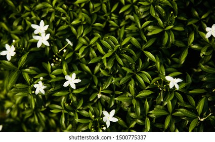 Small white flowers with green leaves background