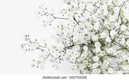 Small white flowers on a white background. Gypsophila flowers bouquet, pattern, wreath. Flower light background. Flat lay, top view, copy space