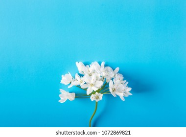 Small white flowers on a colored background in pastel colors