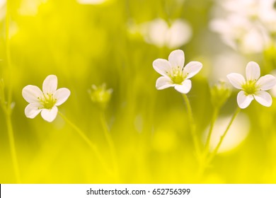 Yellow flower with red center images stock photos vectors small white flowers saxifraga on the delicate background macro of red flowers selective focus mightylinksfo