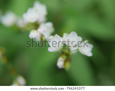 Small White Flowers Vegetables Thailand Stock Photo Edit Now