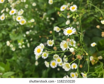 Tonfons portfolio on shutterstock small white flowers in the yard mightylinksfo