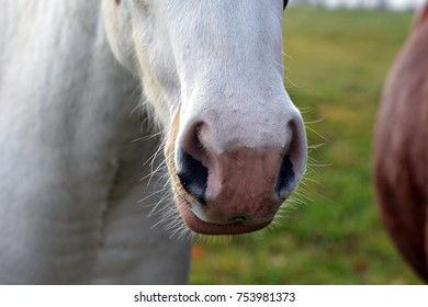 Small white foal