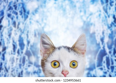 A small white kitten on a winter background with a funny look at Christmas and New Year holidays