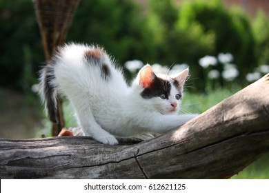 Small white kitten scratching tree branch in the garden
