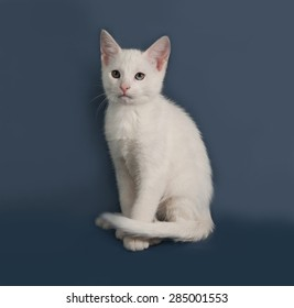 Small white kitten sitting on gray background