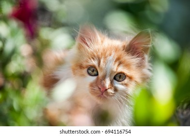 Small white and orange cat among green grass