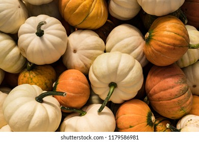 Small White  Orange Pumpkins