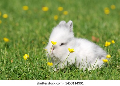 Small white rabbit on meadow in the garden