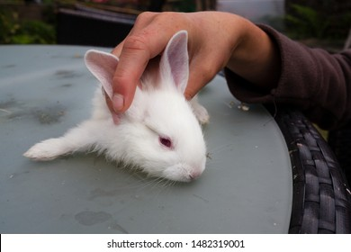 Small white rabbit relaxed lying on a table outdoors while a country woman hand caresses her. Animal loving and pets caring.