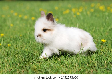 Small white rabbit running on meadow in the garden