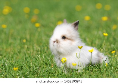Small white rabbit sitting on meadow in the garden