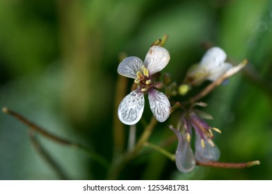 Small white and red flower alone in the field