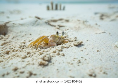Small white sand crab of Kleine Curacao